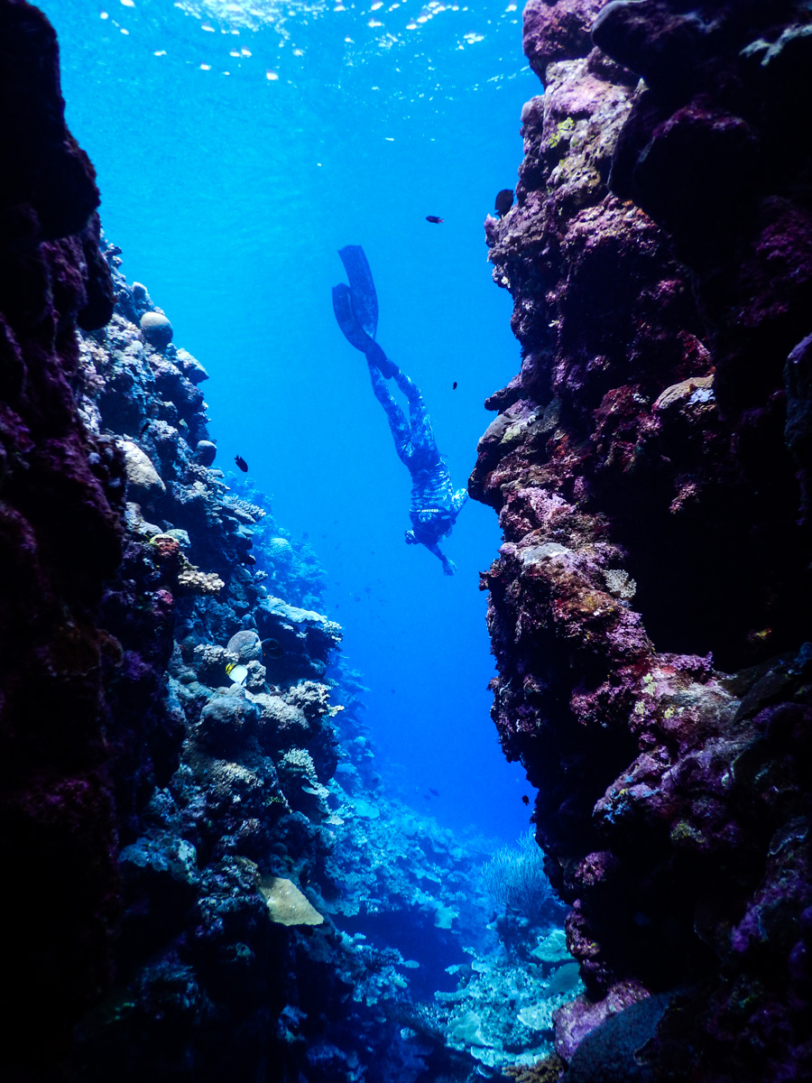 seal swim mornington peninsula