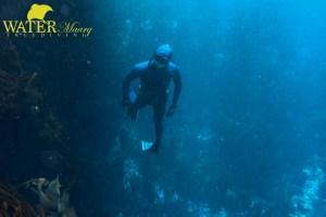 marlon quinn freediving tasmania