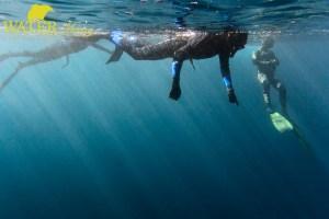 freediver on surface tasman peninsula