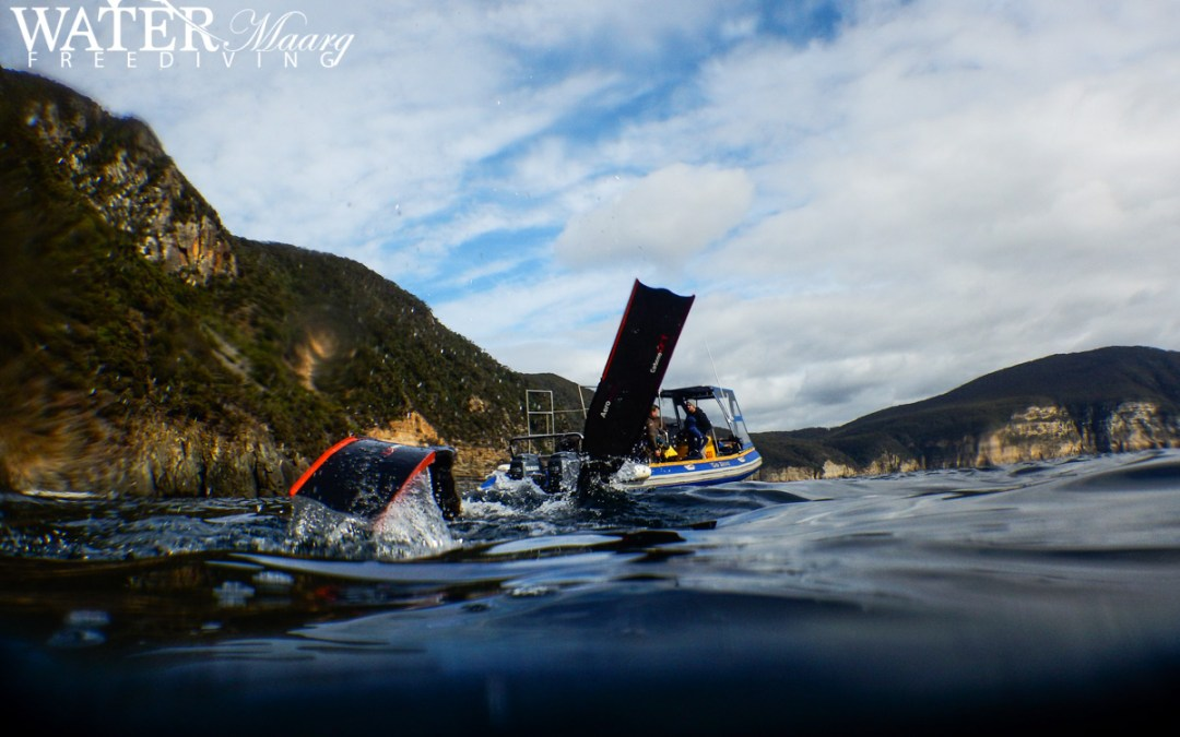 Tasmanian Freediving Course and Fun Dives