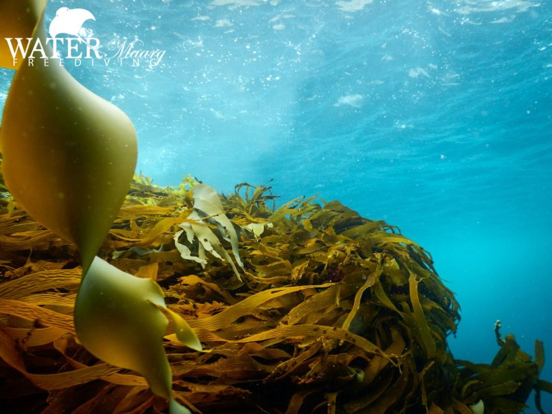 Tasman Peninsula Freediving