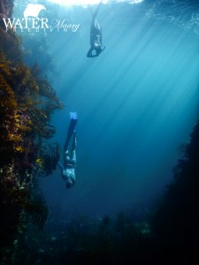 Freediving course Hobart