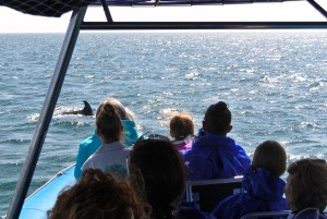 Dolphin Watching Boat Tour