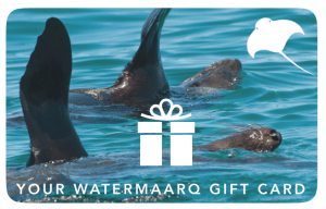 WaterMaarq Sorrento Dolphin and Seal Tours Gift Card 200 Dollars Value