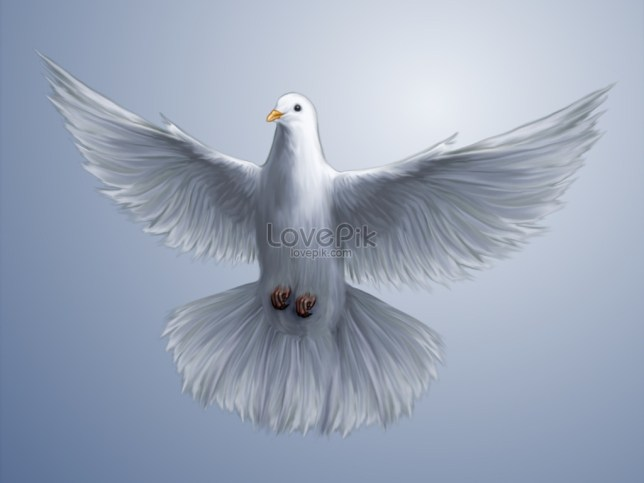 Image result for free dove photo