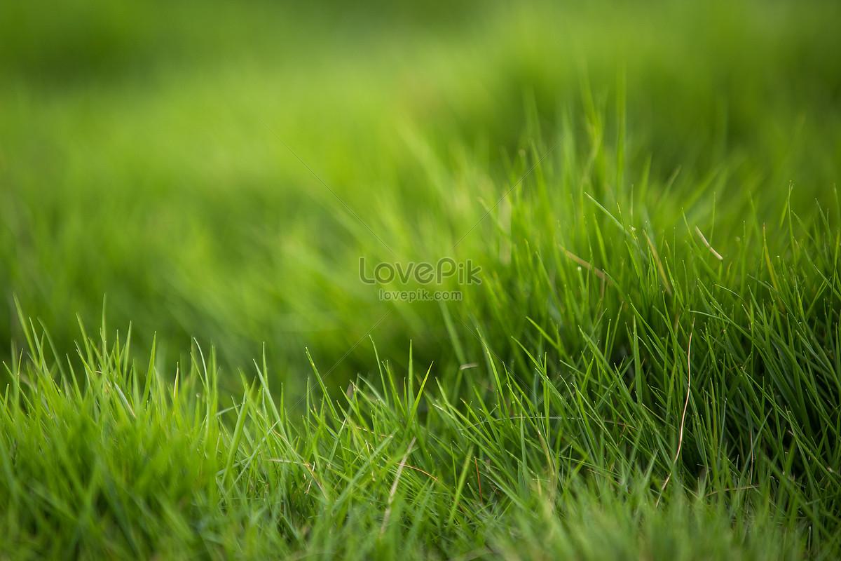 綠色草地背景圖片素材-JPG圖片尺寸5472 × 3648px-高清圖片500532425-zh.lovepik.com