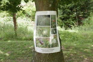 Images by South Somerset MIND