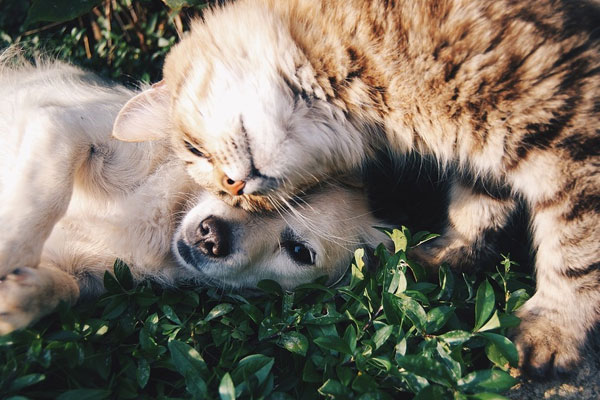 Cat and Dog Friends on the Grass