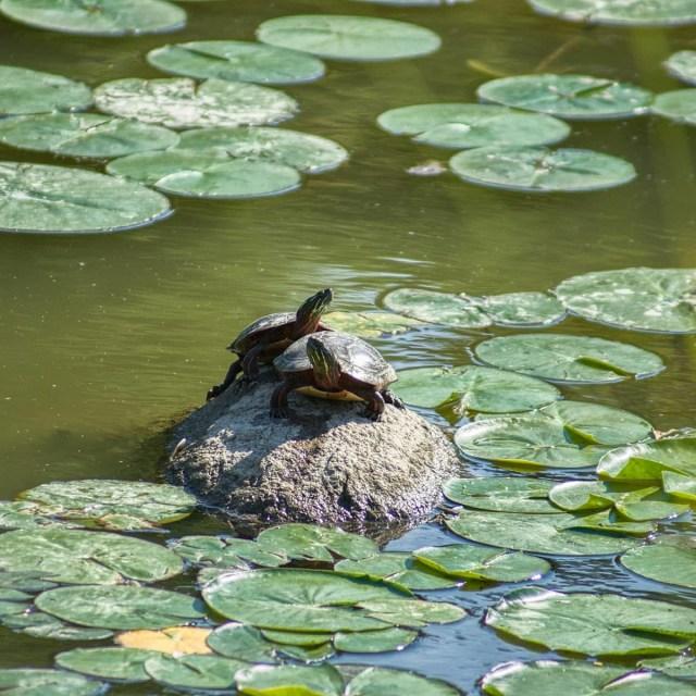 Les plantes aquatiques, comme celles que l'on trouve dans cet étang, jouent un rôle important dans le cycle de l'azote, y compris les nitrates.