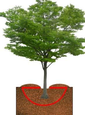 Planting Trees in the Desert, Desert plantation