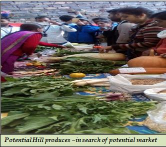 Potential Hill produces –in search of potential market