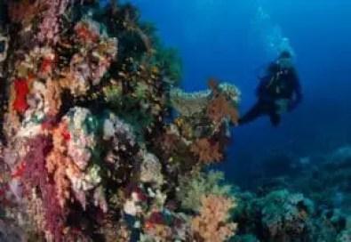 best dive spots