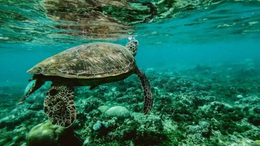 best diving spots in costa rica