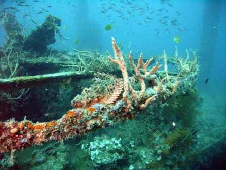 philippine scuba diving reviews
