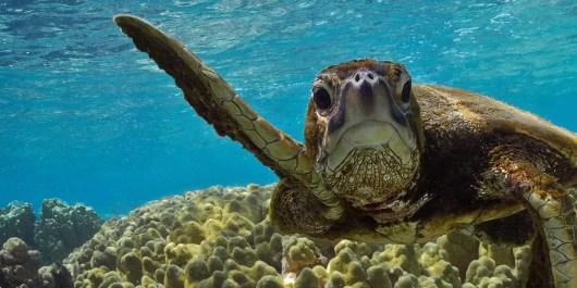 scuba diving in koh tao prices