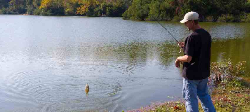 fishing line for crappie