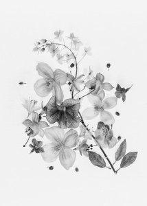 SHARON WILLIAMS, Beautiful Blossoms, 2018