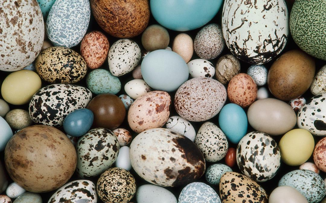 multicolored eggs