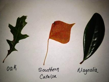 leaf samples