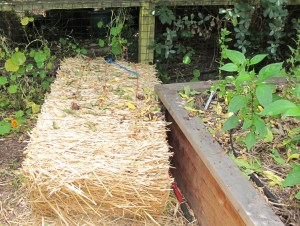 This bale of straw will last me two or three seasons