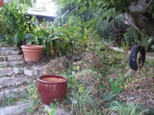 Lots and lots of old nasturtium foliage.
