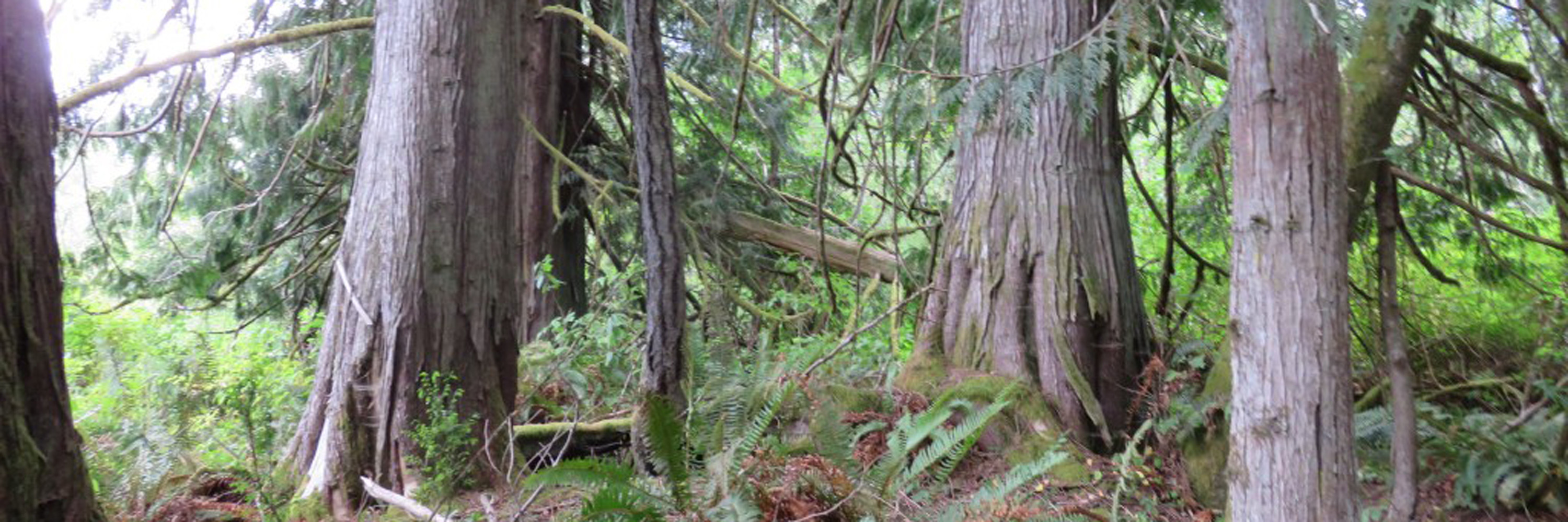 trees-img_2432 cropped
