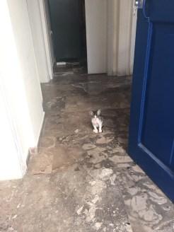 Kitten at hostel