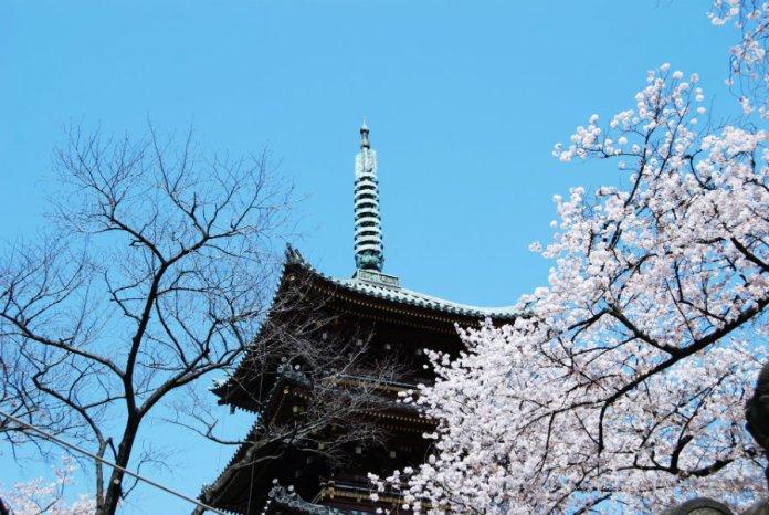 9 ueno-park-sakura-1