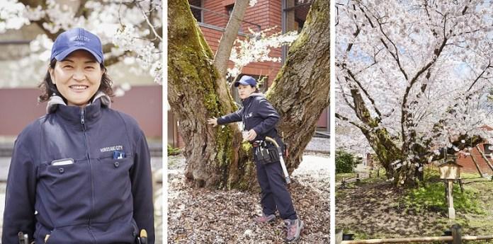 Hirosaki-Sakura-day_614-horz
