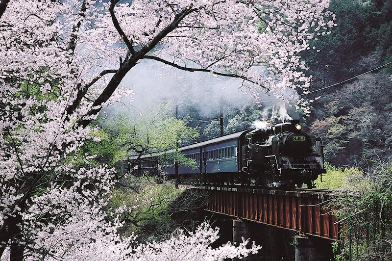 照片提供:靜岡縣觀光協會