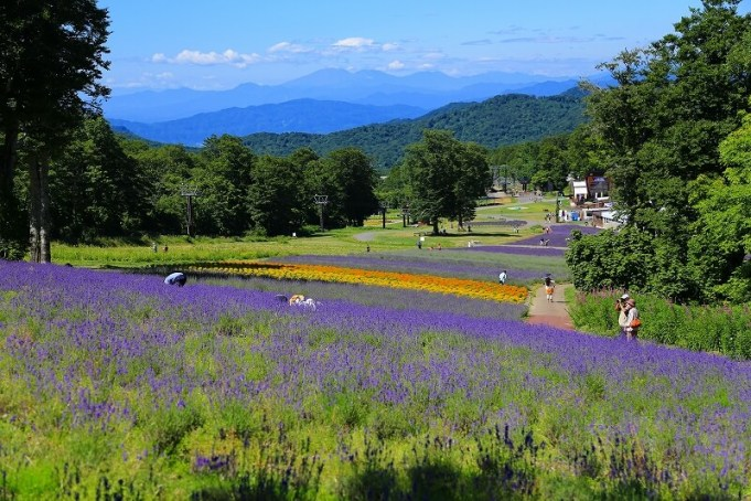 lavender-spot