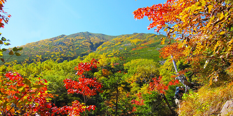 Autumn Guide For Japanese Trees Wattention