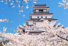 cherry blossoms in Tohoku castle area