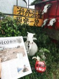 Mr Masami Yoshiza feature in a local article