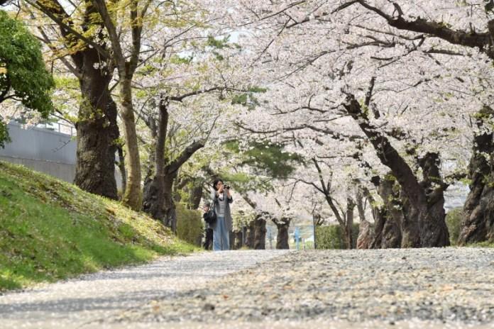 Miyuki Park