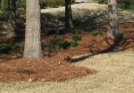 Pine straw-wiki
