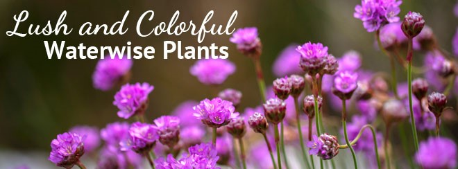 40 waterwise plants and natives by flower color watters garden center lush and colorful banner mightylinksfo