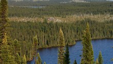 Taiga Landscape in Quebec, Canada, dominated by Black Spruce Picea mariana
