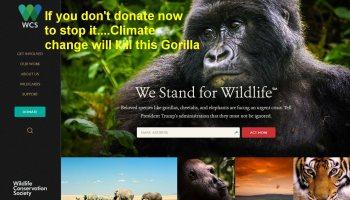c14343caa2c Wild claim  Climate change impacts on endangered wildlife massively under  reported