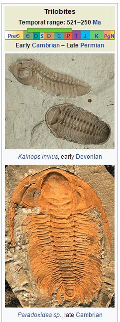 Trilobite_1