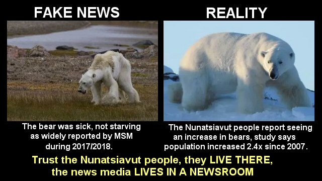 Reality check: Nunatsiavut wildlife manager says polar bears not starving, public misinformed