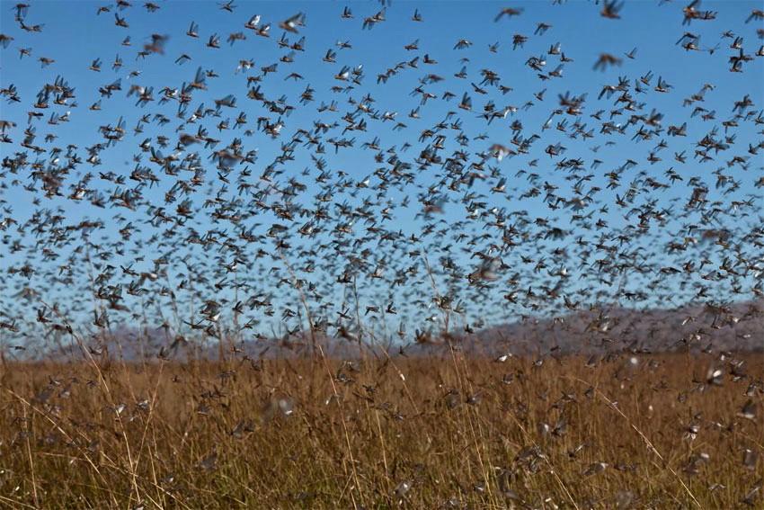 Global Warming to bring biblical insect plague | Watts Up