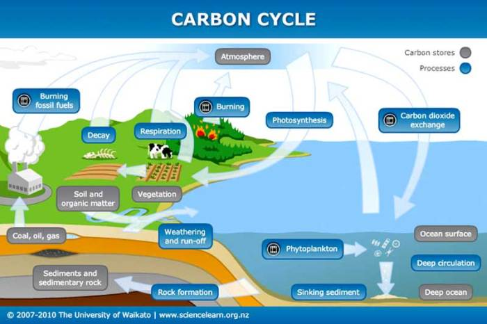 carbon_cycle_800