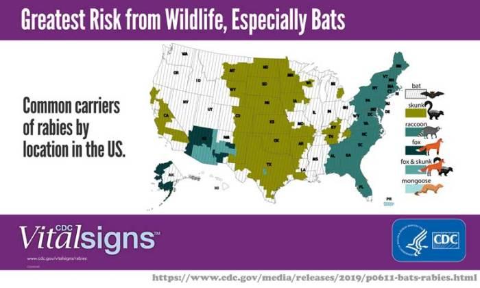 Rabies_Risk_factors_CDC