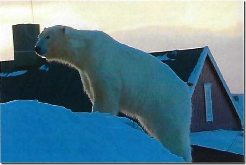 bear-island-8-march-2019_first-bear-seen-since-2011_bjc3b8rnc3b8ya-meteorological-station-photo-svalbardposten