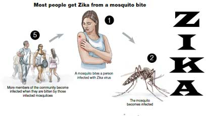 featured_image_zika