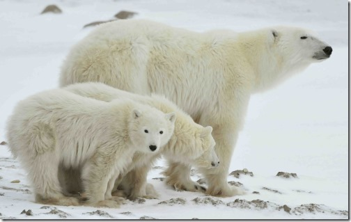 mother-with-cubs-russia_shutterstock_71694292_web-size-e1582489285608