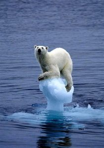 PB iceberg.jpg