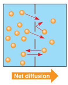 net diffusion 2 way.png