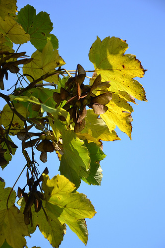 Herbstlaub02